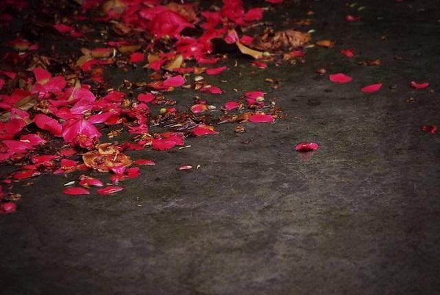 秦观的《虞美人》,词作是在赞美花朵吗?还是借花朵寓托身世之感