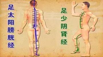 为什么疏通膀胱经就能治许多病?太神奇了!